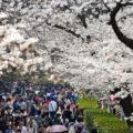 中国政府に殺された民主化の英雄・劉暁波が語った「日本の桜」とは